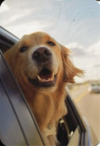 Добрые Самаритяне могут разбить окна, чтобы спасти собак в Теннесси